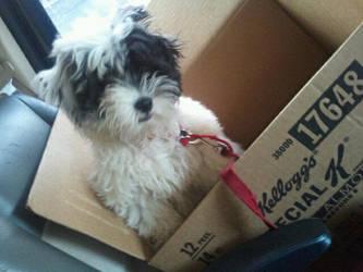 I had a dog once.... by xXTragicAngelXx