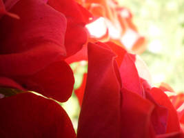 red petals by mysteriousfantasy