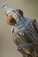 5:1 moth portrait by buleria