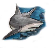 SHARKWEEK Sunday Reef Shark by sharkann