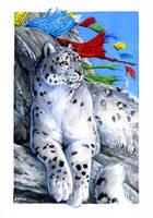 Snow Leopard : Wild Cat Deck by Hbruton
