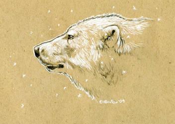 Brown Paper Polar Bear Sketch by Hbruton