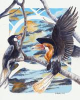 Narcondam Hornbill by Hbruton