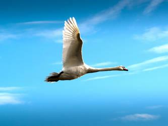 Swan flight by plangdon2