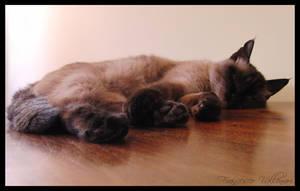 Miss sleeping by HoFattoSoloCosi