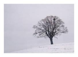 Snow and Fog by ameliasantos