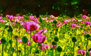 The Poppy Flowers by montag451