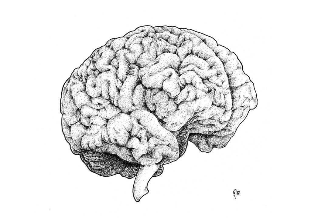 Brain by muneen