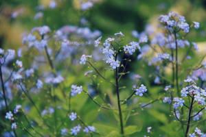 flower by spiti84