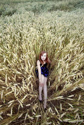 lost in corn by phoheisel