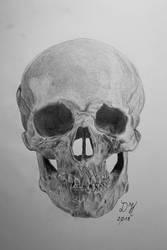 Skull study by kraftdorian