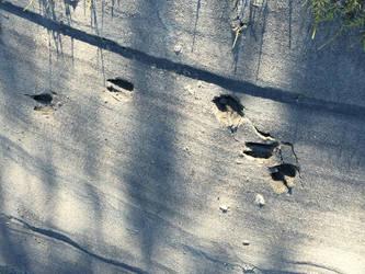 Kowee Creek, 2: deer tracks. by cmmdrsigma
