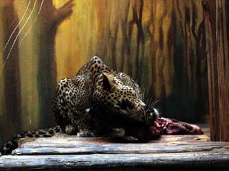 Wild by marousha