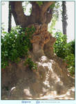 Old Gnarly Tree by LilyStox
