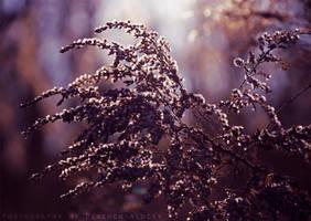 Beautiful Nature by DevchonkaLucky