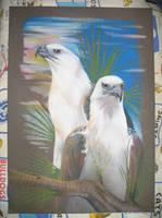 White Breasted Sea Eagle Pair by LyrebirdJacki