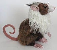 tufted rat by kimrhodes