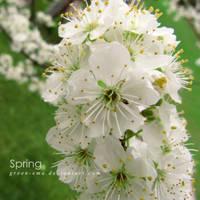 Spring by ateljEE