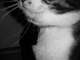 Kitten Smiles by Thunderpurr