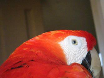 Rainbow Macaw by Thunderpurr