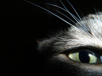 Eye Spy by Thunderpurr