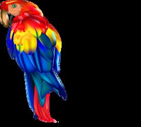 Papousek Vojta by vojtabeil