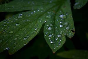 A thousand tears I by petrova