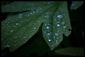 A thousand tears II by petrova