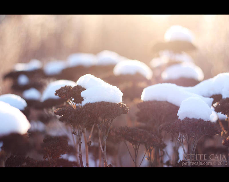 Snow flowers by petrova