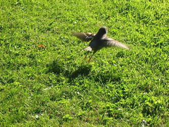 Flight for life by petrova