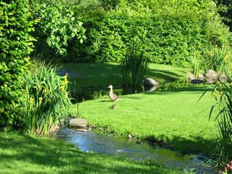 Green garden by petrova