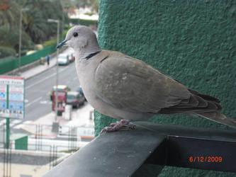 Birdie 1 by EmmiP