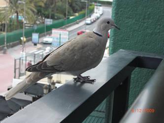 Birdie 2 by EmmiP