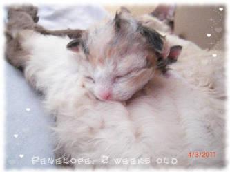 Kitten Dream by EmmiP