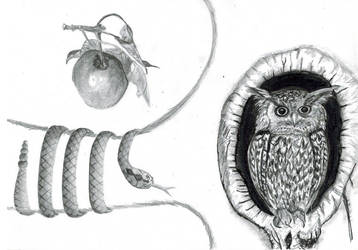 The owl, the snake and the apple (2006 - 2018) by elfenscheisse