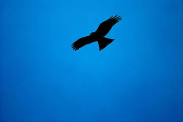 Eagle 3 by nainasamima