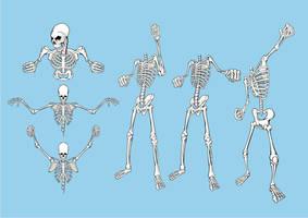 Free Skeleton Pack by artamp