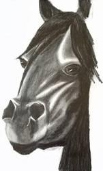 Pony sketch by IamDogged
