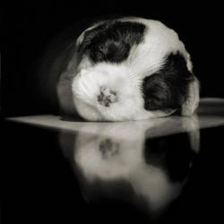 Dreaming by anjelicek