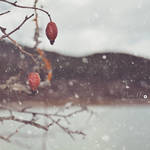 Snowy days by badnan