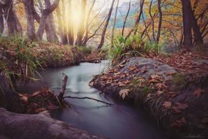 Wilderness by badnan