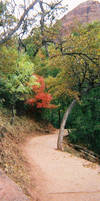 The Path with Pink Tree by vashsunglasses