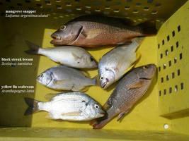 Mangrove Fishing by matmohair1