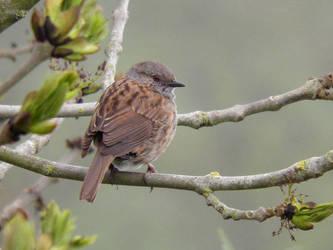 Garden Bird 5 by JanuaryGuest