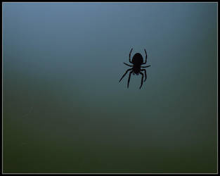 Tiny Spider by fuddyduddy