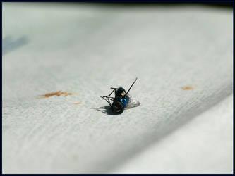 Dead fly by fuddyduddy