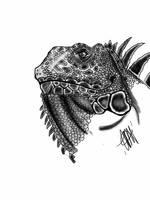 iguana by TJSB