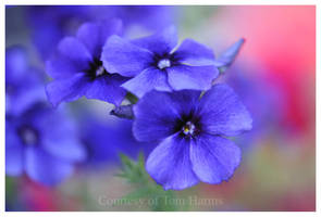 My Blue Heaven by acutely