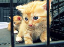 Take Me Home Please? by AkatsukiGirl27