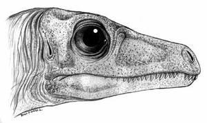 Eoraptor lunensis by Christoferson